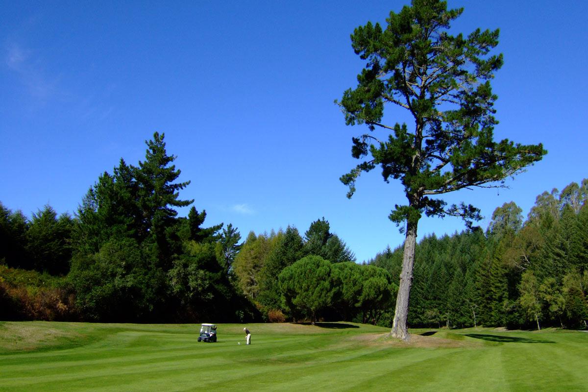 ニュージーランド ゴルフ レッスン 感想 コメント 017