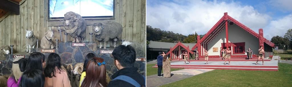 ニュージーランド 観光 感想 コメント 060b